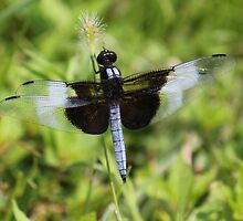 Dragonfly  by Sheryl Hopkins
