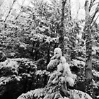 Snowtrees by ekenney87
