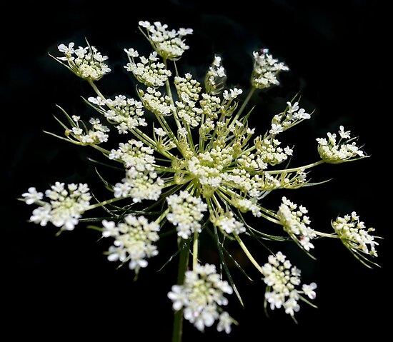 A Living Snowflake by rosaliemcm