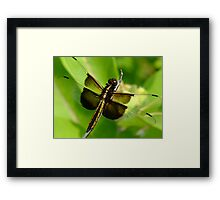 I Love The Light In Your Big Brown Eyes Framed Print