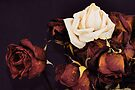 ROSES AND MEMORIES by Thomas Barker-Detwiler