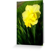 Daffodils In The Spring Greeting Card