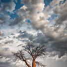 Under a Restless Sky by Mieke Boynton