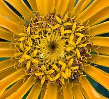 Flowers within the Flower by Adam Bykowski