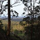 From The Bush To The Beach by aussiebushstick
