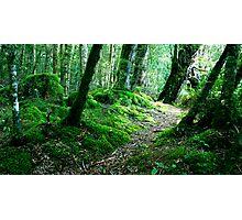 Woodland New Zealand Photographic Print