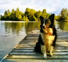 Whisper - Border Collie by Gracey