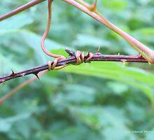 Tangled Vine by Nicole Schmidt