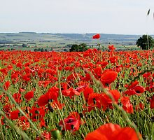 Poppies We will remember by Isobel Embleton