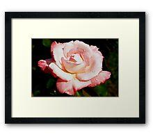 Dewy pink rose Framed Print