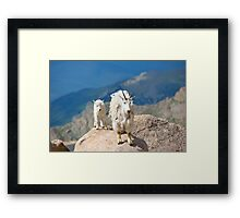 Mother and Baby Goat Framed Print