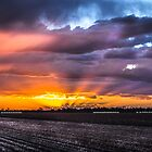 half stripped cotton field on sunset by outbacksnaps