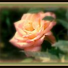 The Rose ! by Elfriede Fulda