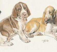 Bracco Italiano Puppies by BarbBarcikKeith