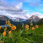 Wildflowers Glacier National Park by Luann wilslef
