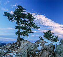 Above Boulder Colorado Spirit Tree by Greg Summers