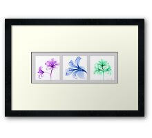 Three delicate flowers Framed Print