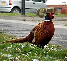 Ironbridge Pheasant by simonlloydphoto