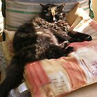 The Princess and the Pea (or How Many Cushions Does One Cat Need!) by lezvee