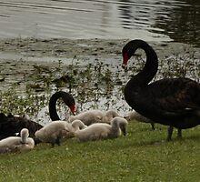 The Family by myraj