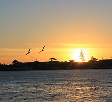 Flying into the sunset.  The Lakes, Forster NSW by JDWPhotos