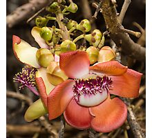 Cannonball Tree Tropical Flower Photographic Print