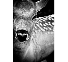 Oh Dear, Oh Deer. Photographic Print