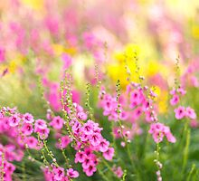 Summer brights by Zoe Power