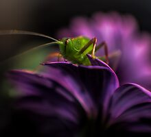 Purple Surprise by yolanda