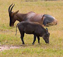 Topi and african warthog by Valerija S.  Vlasov