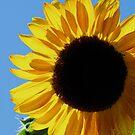Hello Sunshine by Jan  Tribe