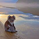 Koala Reflections by pablosvista2