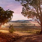 Wineries in Denman III - Near Muswellbrook, NSW by Mark Richards