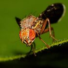 Fruit Fly #2 by Kane Slater