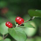 Red Berries by Renee Ellis