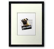 Pug Shot Framed Print