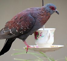 Pigeon on a cup  by Elizabeth Kendall
