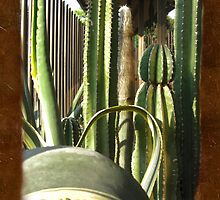 Cactus Garden Blank P3F0 by Christopher Johnson
