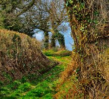 A Norfolk Country Lane by JulieCoe