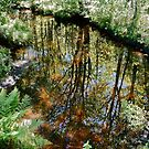 Summer Reflections - 6 Aug 13 by David Davies