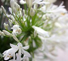 flower by GrAPE