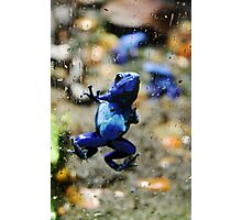 Poison Frog Screen Cling Photographic Print