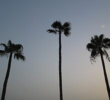 Gran Canarian Palm Trees by Emily Clark
