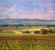 Denman Winery III - Near Muswellbrook, NSW by Mark Richards