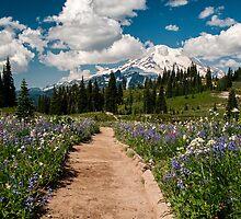 Mountain Kaleidoscope - Mt. Rainier N. P. by Mark Heller