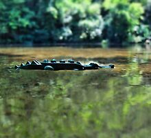 Pictures from the pirate road-trip: Alligator! by bricksailboat