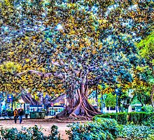 Beautiful Tree in Valencia, Spain by Noam  Kostucki