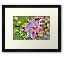Purple and White Flower in Malta Framed Print