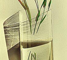 Half still life by andreisky