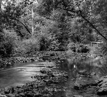HitchCock Woods by Adam Kuehl